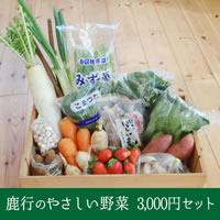 【金曜日発送分】茨城鹿行(鉾田)産やさしい野菜 3000円セット