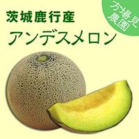【方波見農園】アンデス メロン 1箱 約5kg(4~5玉入) ~ 茨城鹿行(鉾田)産